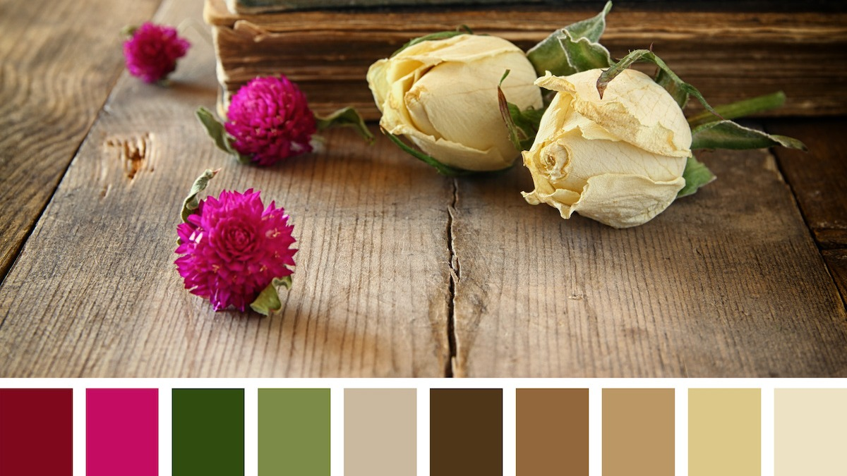 5 способов создать цветовую палитру пленки: как использовать цвет в пленке