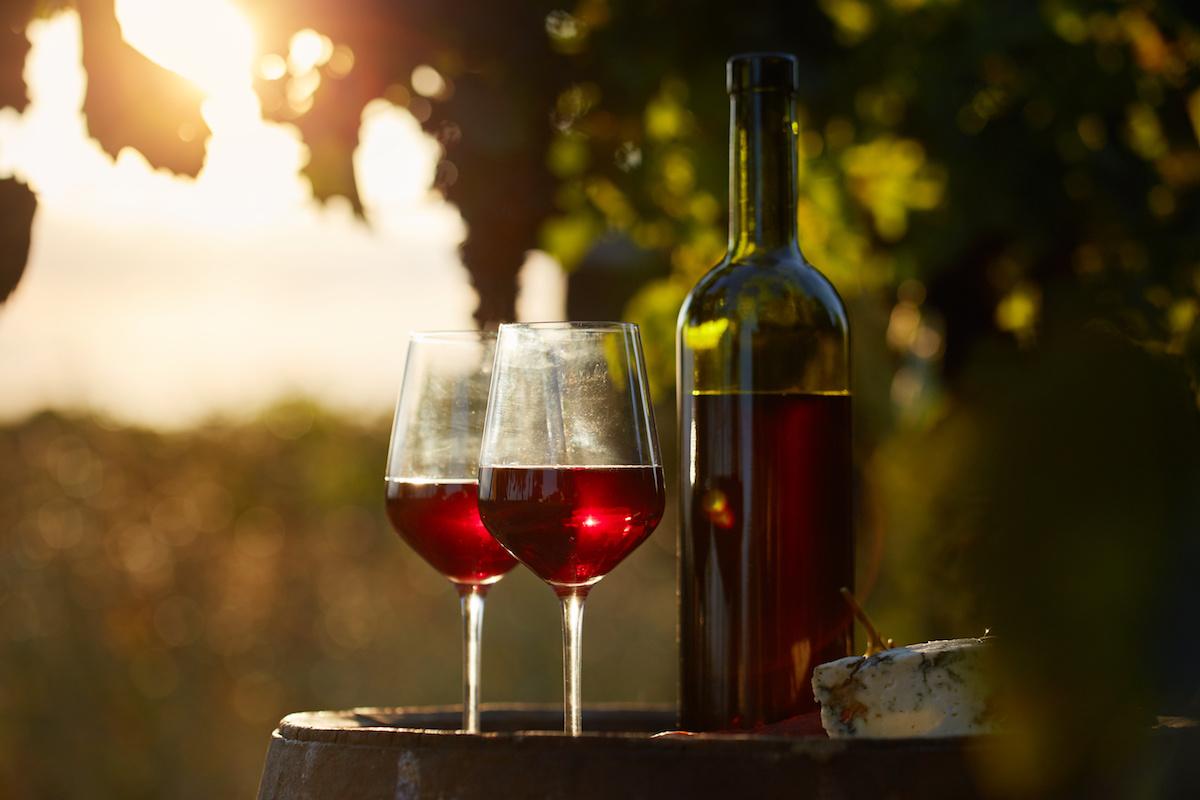 Saznajte više o vinu Barbera: Vodič kroz povijest, karakteristike i uparivanje talijanskog vina od grožđa Barbera