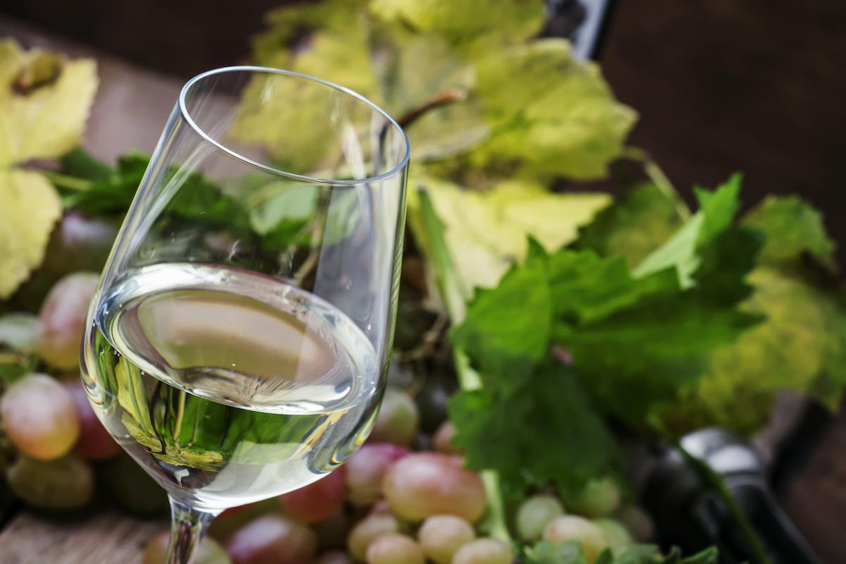 En savoir plus sur le sauvignon blanc : raisins, vin, région, goût et accords