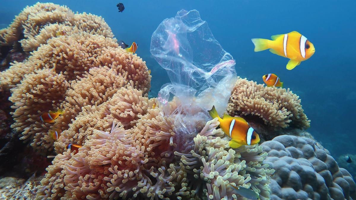 Ookeanireostus: 6 näpunäidet ookeanireostuse vähendamiseks