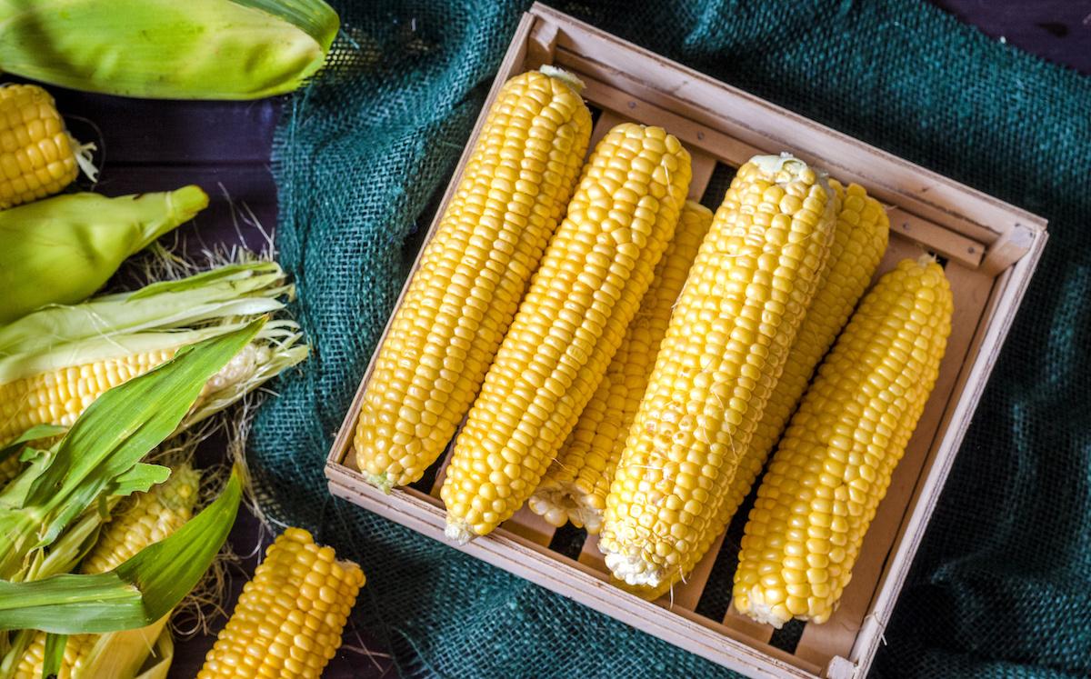 Comment faire pousser, entretenir et récolter le maïs dans un jardin potager