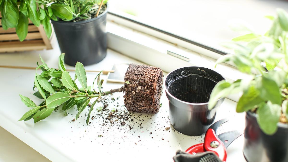 Как создать сад на подоконнике: 9 растений для домашнего сада