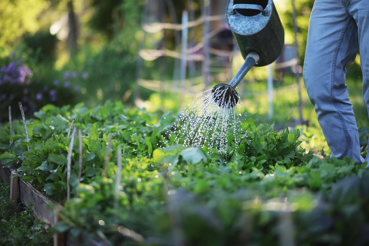 Kako pokrenuti dvorišni vrt: 11 koraka za nove vrtlare