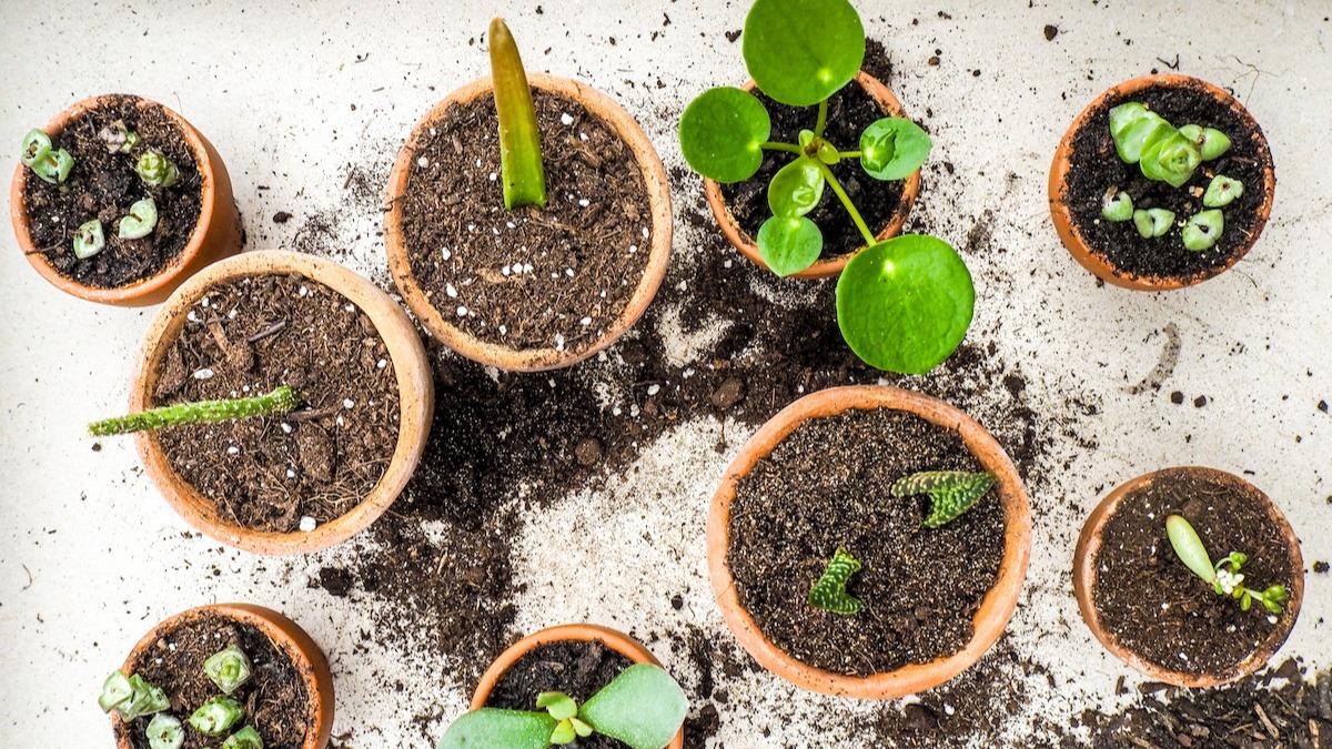 Hur man förökar växter: 6 tips för växtförökning