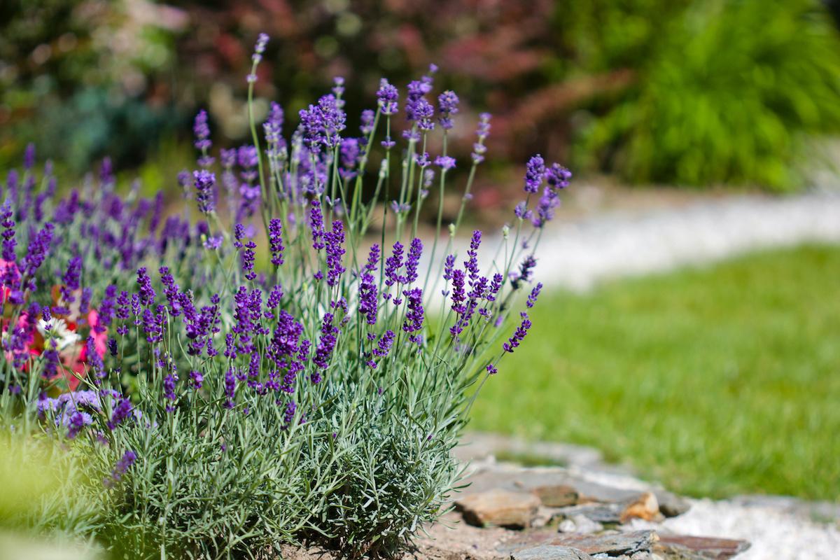 10 vrsta biljaka tolerantnih na sušu