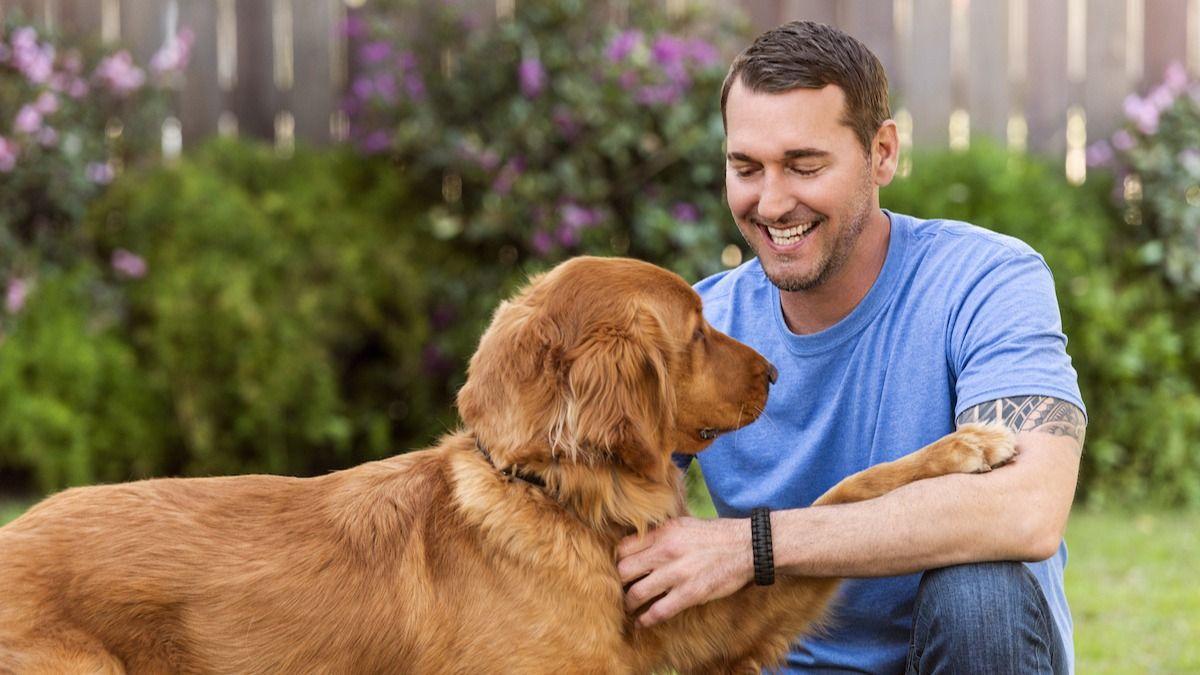 Guide en 8 étapes de Brandon McMillan pour cambrioler un chien