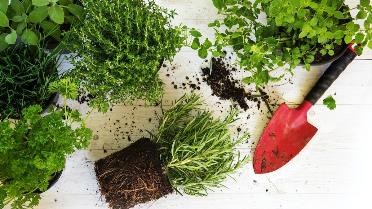 6 načinov, kako preprečiti, da bi zelenjava nastala s sorniki