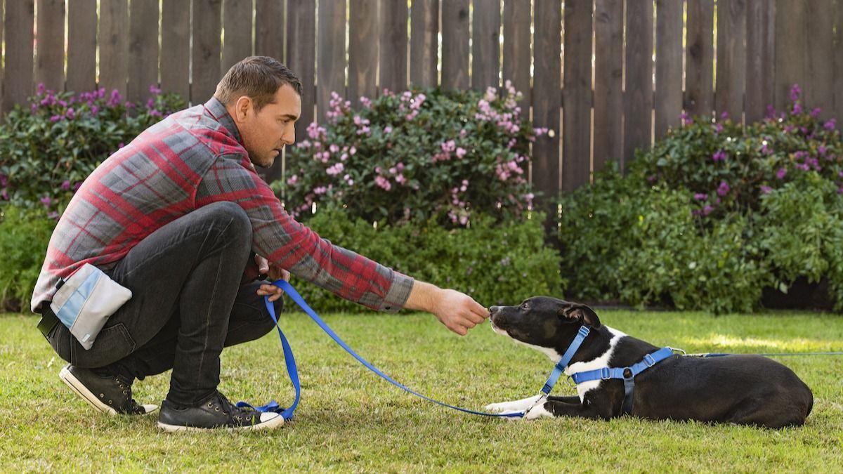 Le guide de Brandon McMillan pour apprendre à votre chien à se coucher