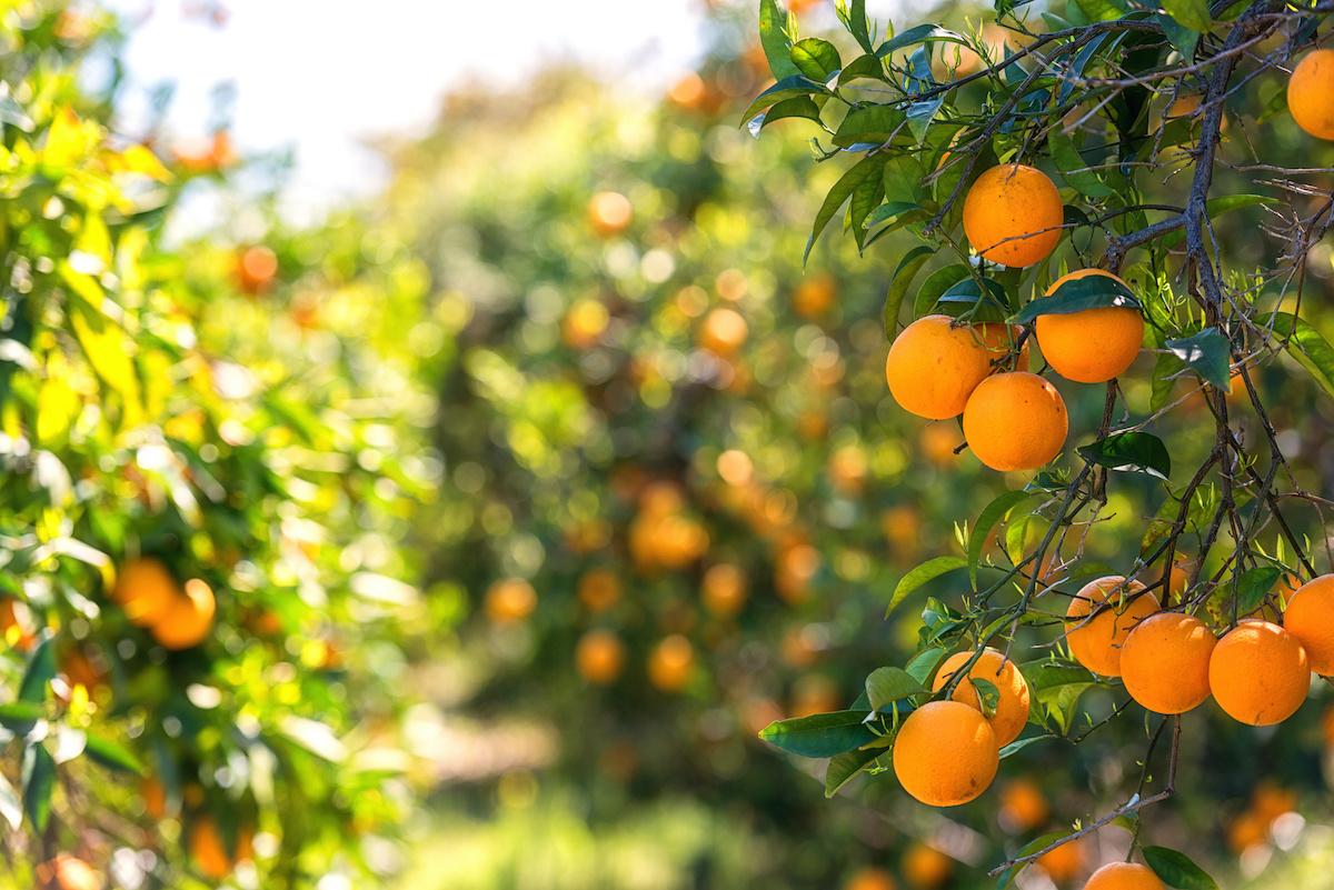 Guide de jardinage : les 16 meilleurs arbres fruitiers pour un jardin potager