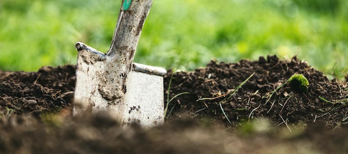 Comment utiliser l'humus pour améliorer la santé du sol de votre jardin