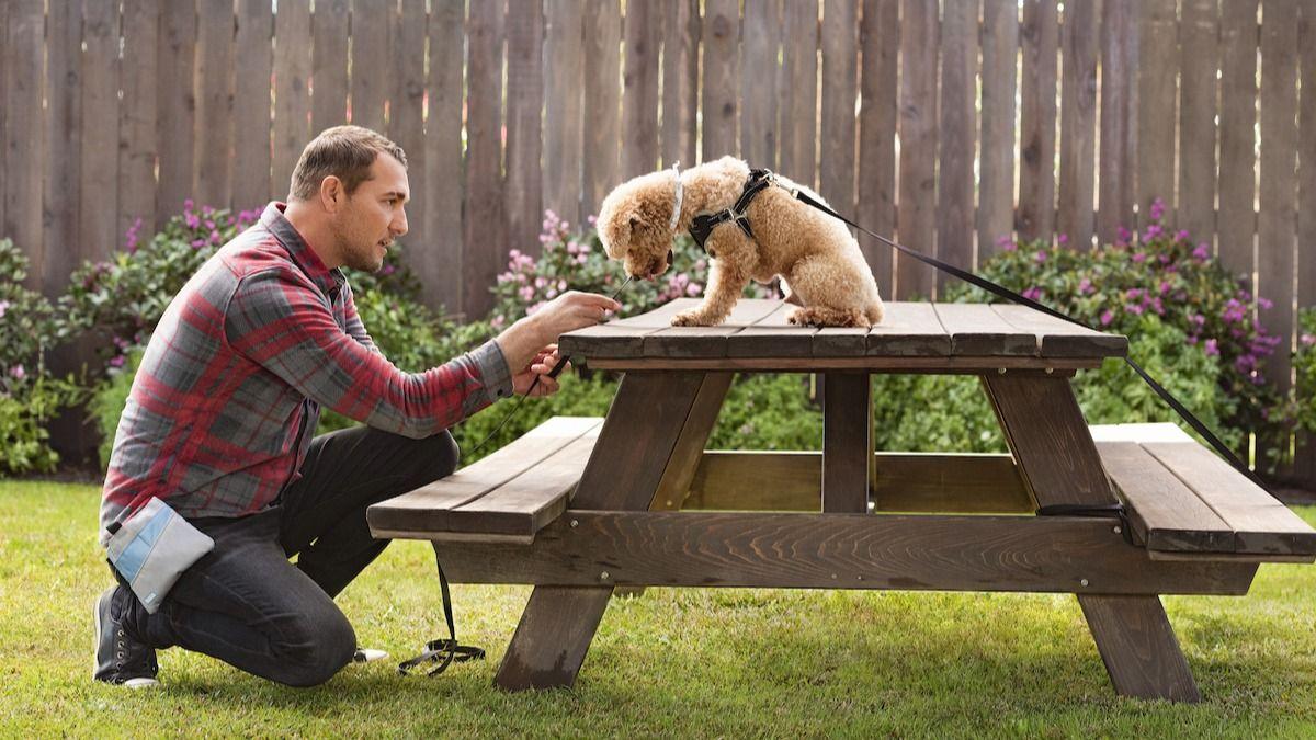 Les 10 outils essentiels de dressage de chiens de Brandon McMillan