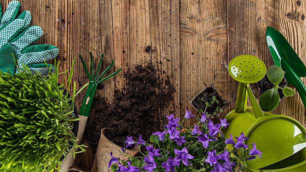 Kako započeti cvjetnjak: Vodič za sadnju u 8 koraka