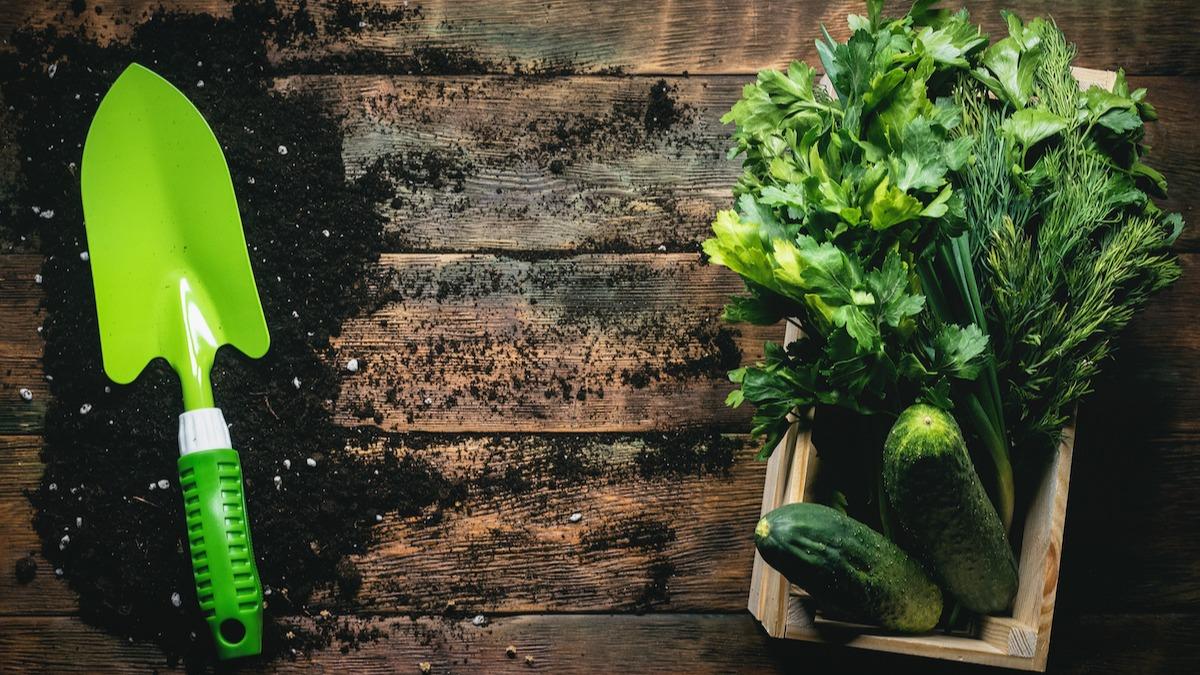 Guida alla semina del compagno di aneto: 5 piante da abbinare all'aneto