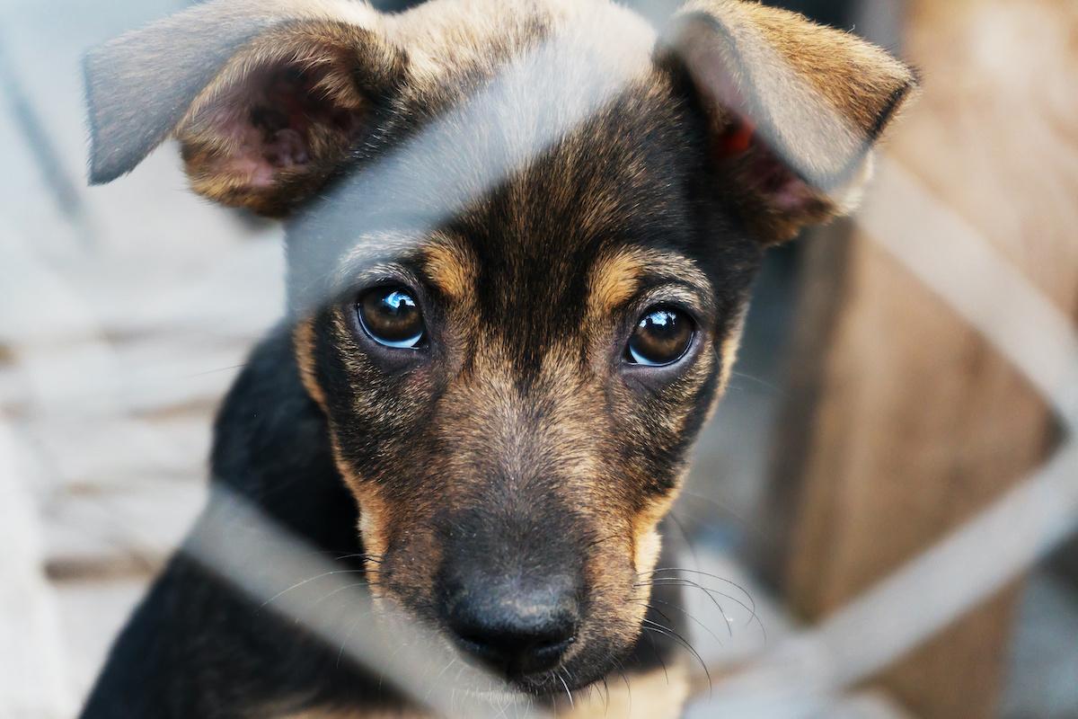 Comment choisir la bonne race de chien : 6 facteurs à considérer