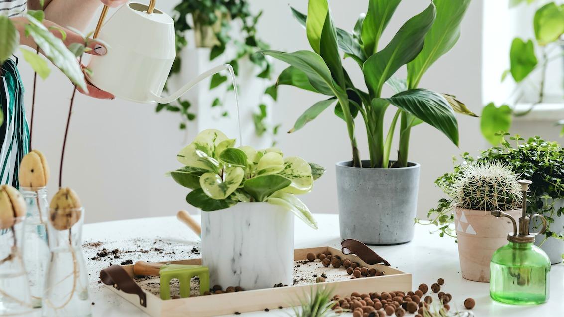 Kako uzgajati biljke u zatvorenom: 6 savjeta za uzgoj sobnih biljaka