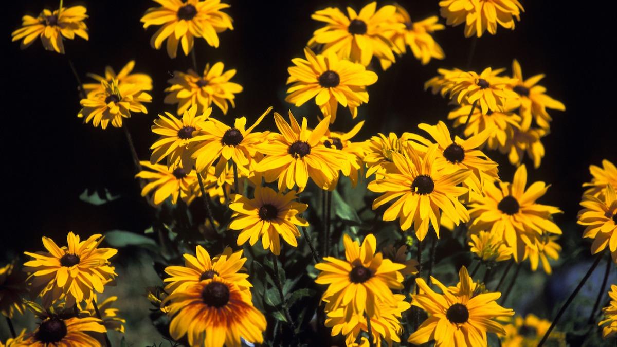 Guide des plantes bisannuelles : Comment faire pousser des bisannuelles dans votre jardin