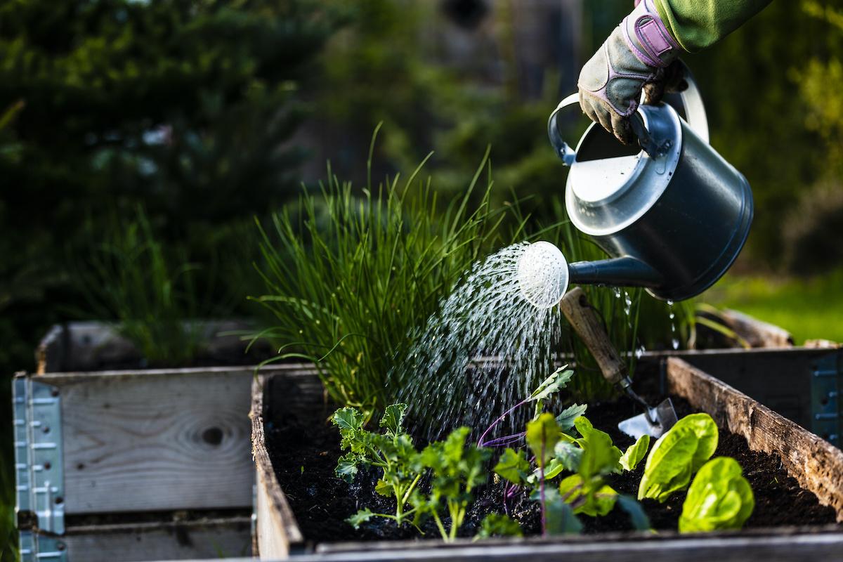 5 najboljih vrsta biljaka za uzgoj u kućnom vrtu