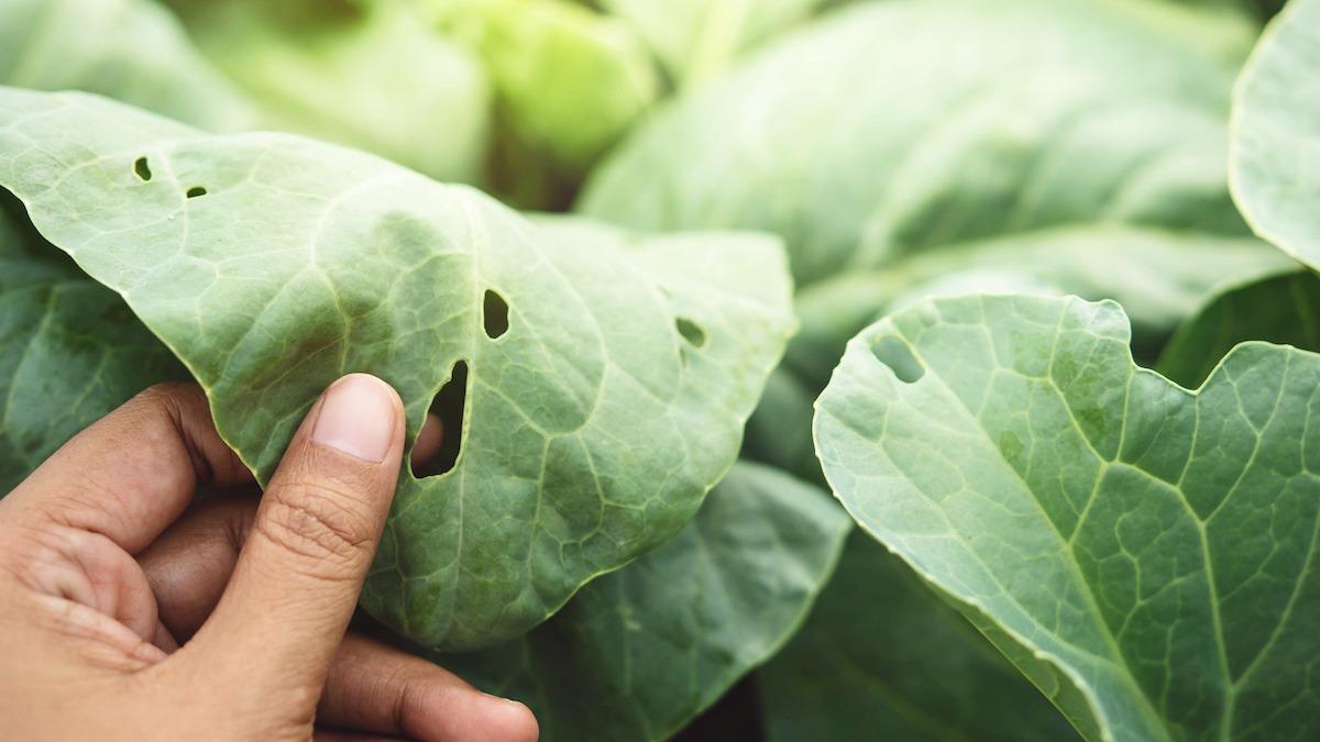 Как избавиться от 7 распространенных садовых вредителей