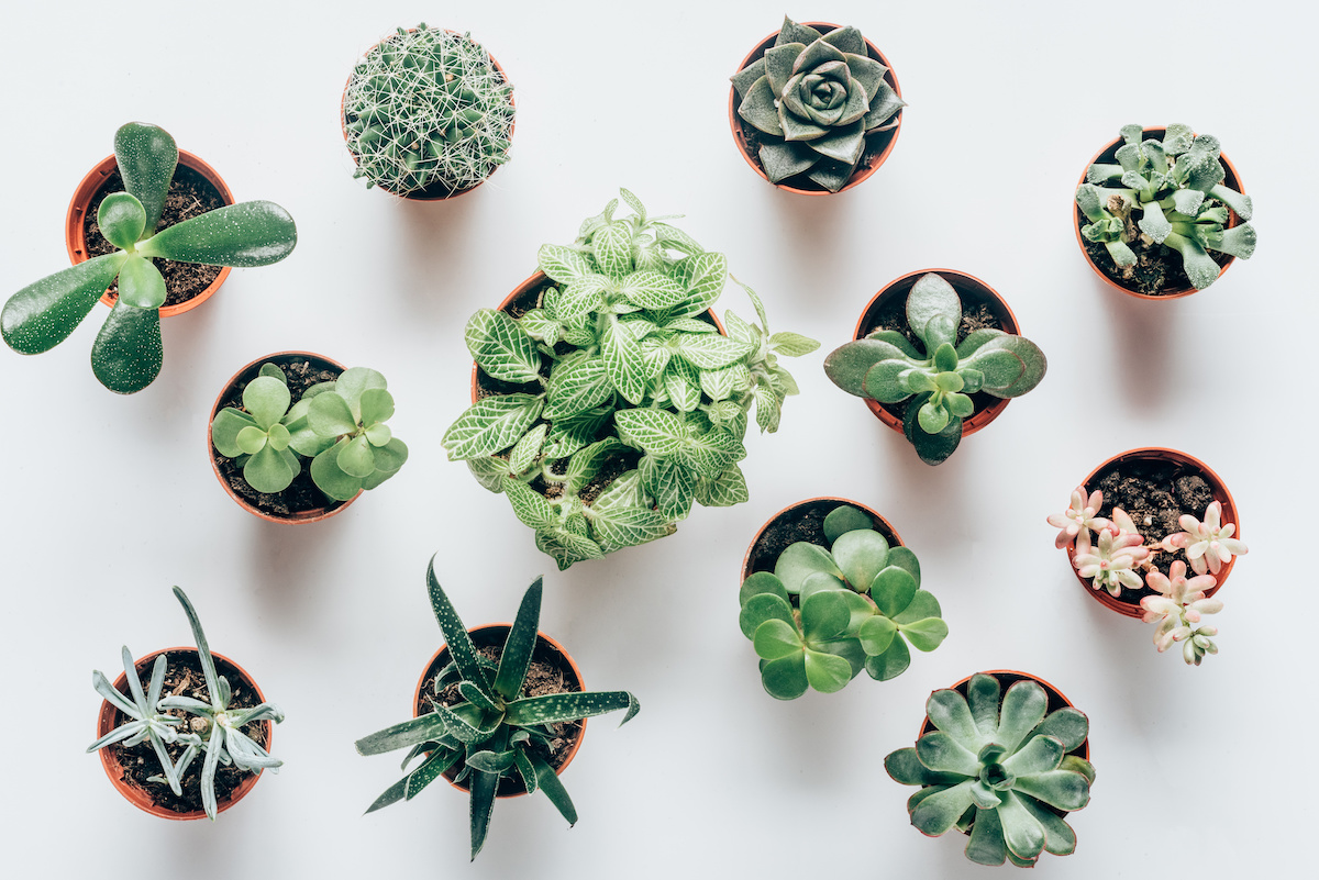 실내외 다육 식물 : 12 종의 다육 식물