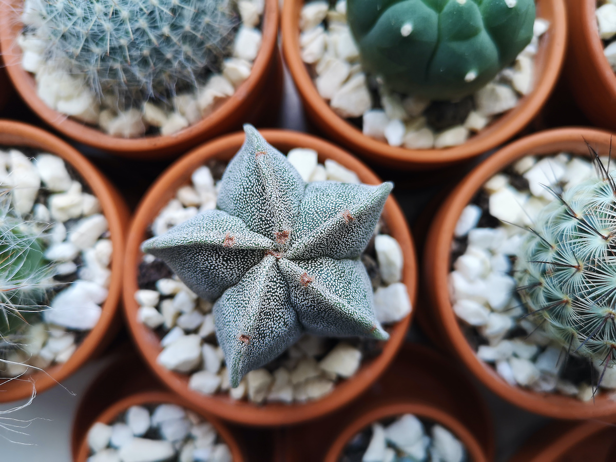 7 najboljih vrsta kaktusa za uzgoj u zatvorenom