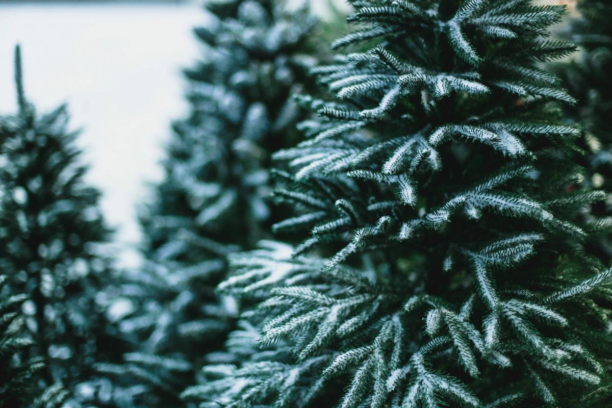 Comment prendre soin d'un arbre de Noël : 6 conseils pour l'entretien d'un arbre de Noël
