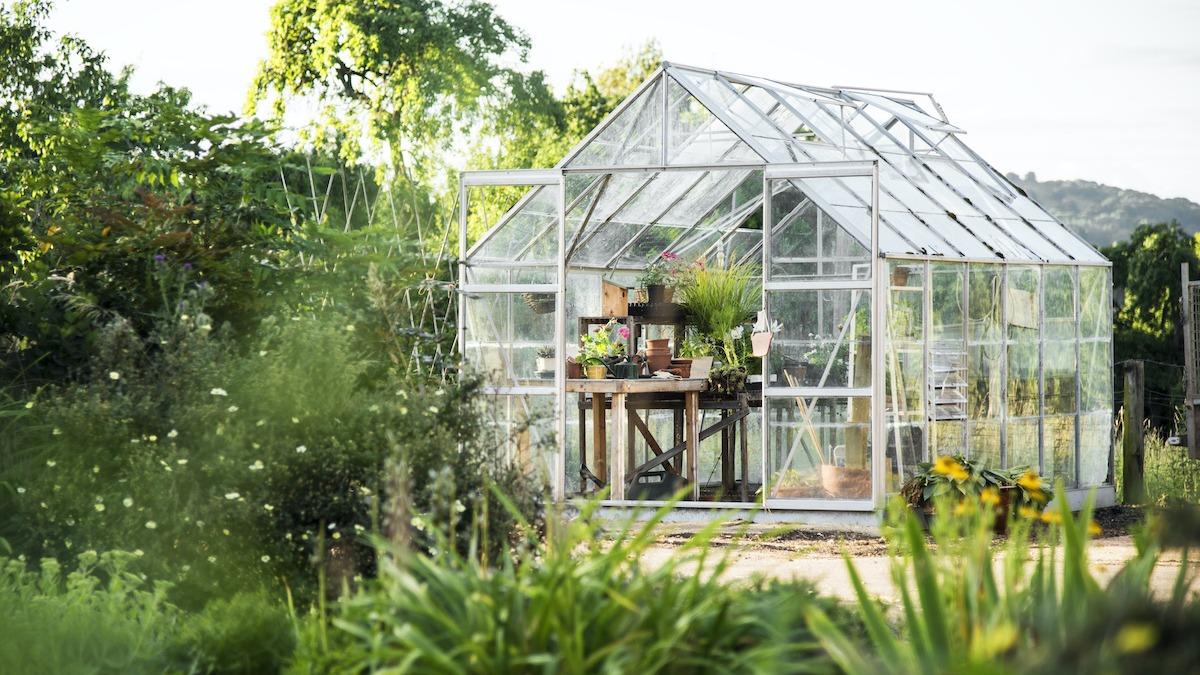 ग्रीनहाउस गाइड: अपना खुद का ग्रीनहाउस कैसे स्थापित करें