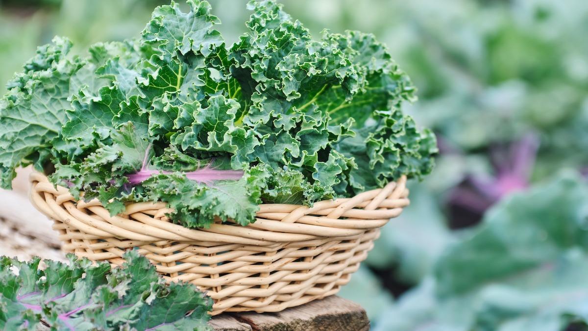Kale Companion Planting Guide: 7 plantes à associer au chou frisé