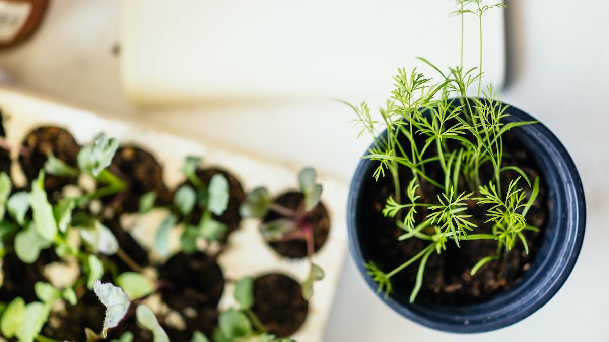Come fare la carta da seme piantabile a casa?