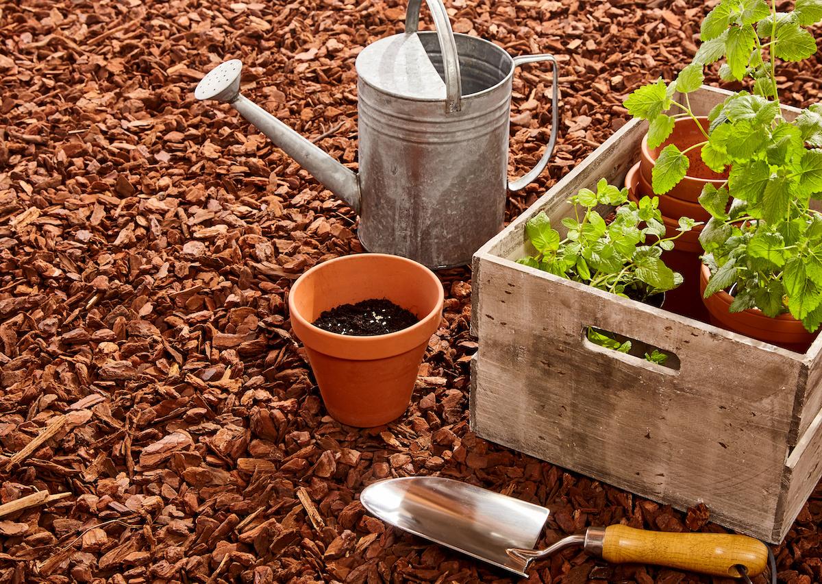 Kuidas oma köögiviljaaeda multšida: 4 tüüpi orgaanilist multši