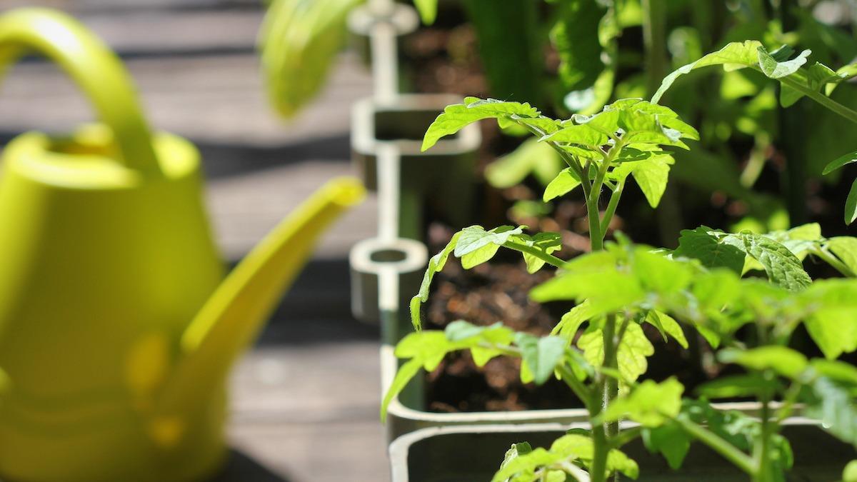 Comment faire pousser un jardin sur balcon: 4 conseils pour le jardinage sur balcon