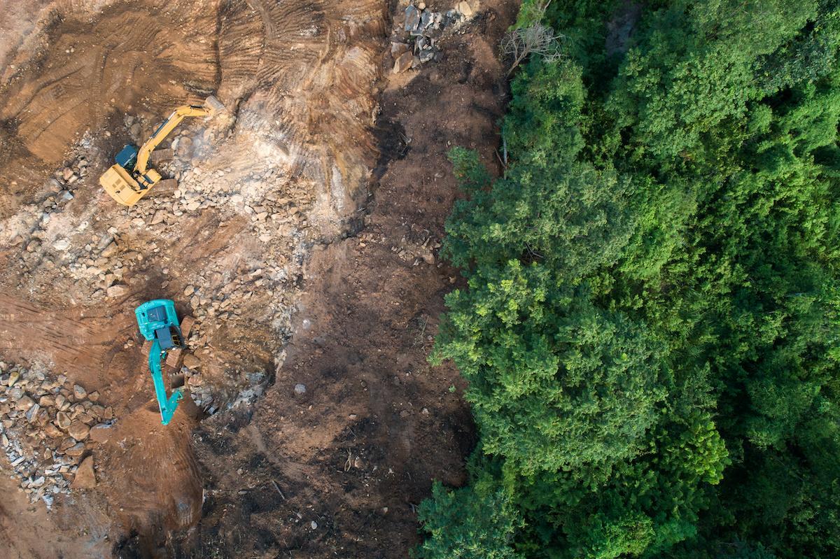 La déforestation expliquée : 3 causes de la déforestation