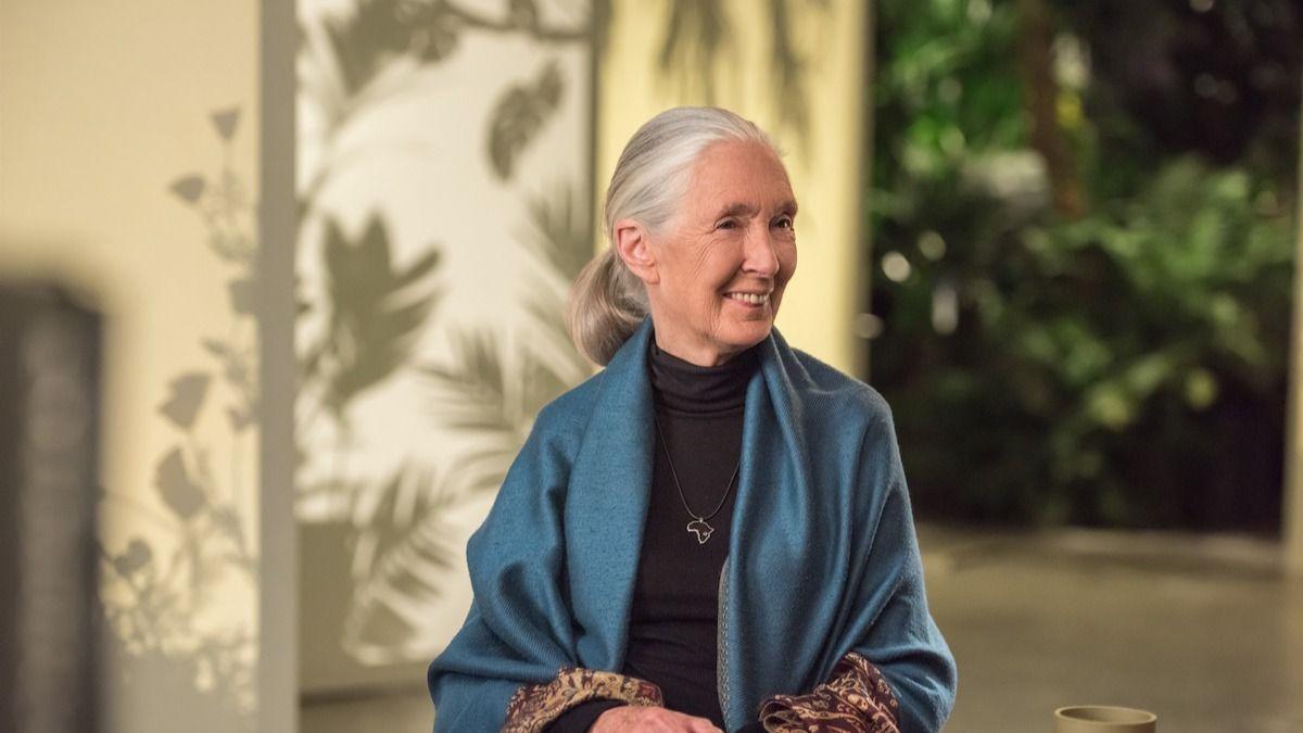 Dr Jane Goodall : 15 livres du Dr Jane Goodall